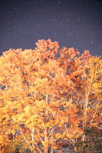 ミズナラのライトアップと星空の写真素材 [FYI01522668]