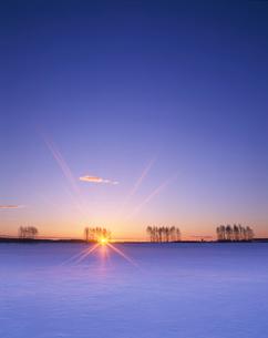 雪原と朝日と木立の写真素材 [FYI01522761]