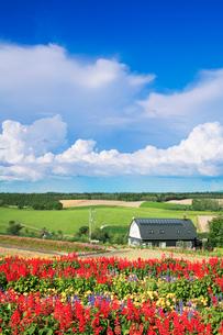 サルビアなど花畑と民家の写真素材 [FYI01522775]
