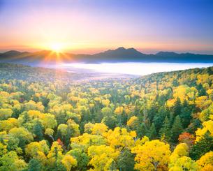 朝の黄葉(西クマネシリ岳)の写真素材 [FYI01522877]