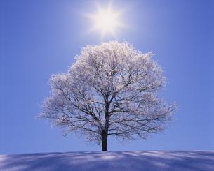 霧氷の木立と木もれ日の写真素材 [FYI01522890]
