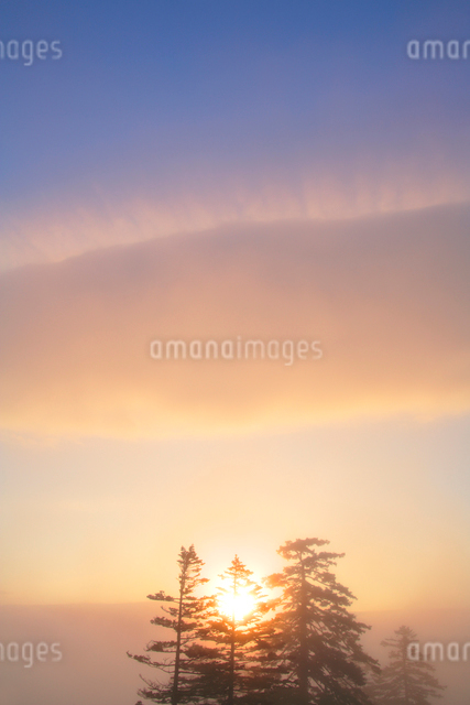 朝霧とエゾマツ林と朝日の写真素材 [FYI01522929]