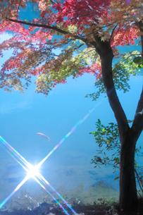 モミジと輝く水面の写真素材 [FYI01523228]