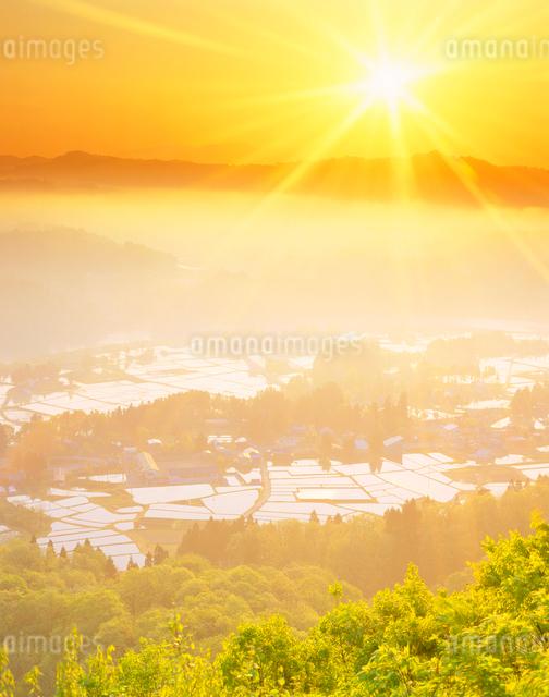 水田と朝日の写真素材 [FYI01523278]