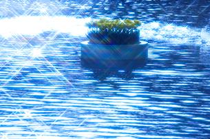 チューリップ花壇と輝く水面の写真素材 [FYI01523300]