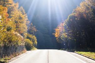 秋の樹林と道路と光芒の写真素材 [FYI01523301]