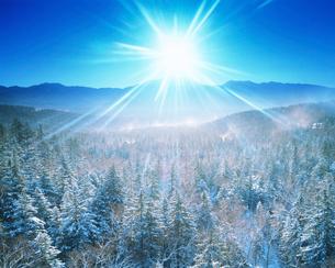 樹林と西クマネシリ岳の写真素材 [FYI01523352]