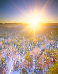 樹林と西クマネシリ岳と朝日の写真素材 [FYI01523414]