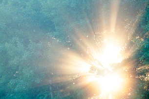 朝霧と光芒と木もれ日の写真素材 [FYI01523449]