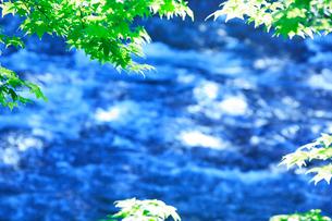 モミジの若葉と清流の写真素材 [FYI01523466]