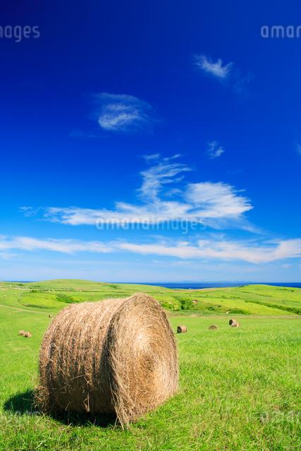 牧草ロールと青空の写真素材 [FYI01523540]