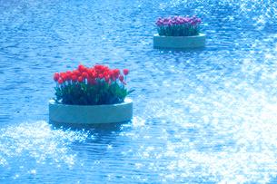 チューリップ花壇と輝く水面の写真素材 [FYI01523580]