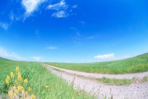 道路と牧草地とハルザキヤマガラシの写真素材 [FYI01523740]