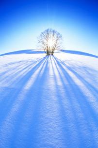 雪原と木立の写真素材 [FYI01523753]