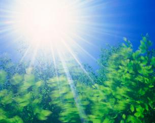 風に揺れるブナの若葉と太陽の写真素材 [FYI01523762]