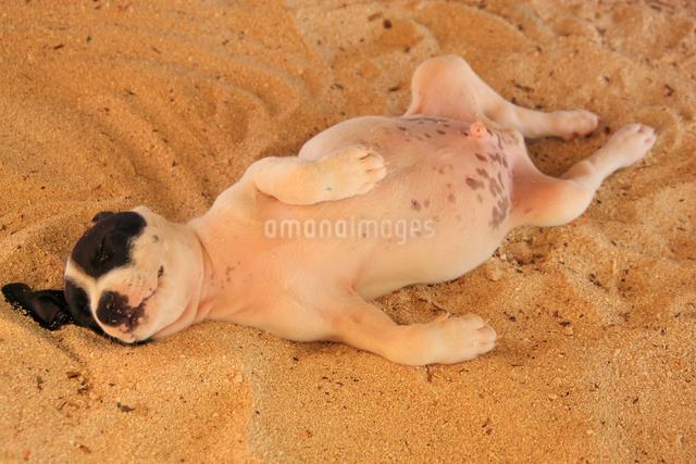 昼寝をする子犬の写真素材 [FYI01523965]