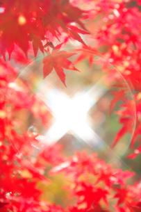 紅葉のモミジの葉と水面からの光の写真素材 [FYI01524118]