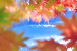 紅葉のモミジの葉と輝く水面の写真素材 [FYI01524176]