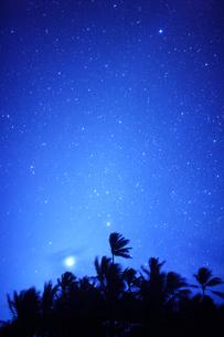 明けの明星とヤシの林の写真素材 [FYI01524181]