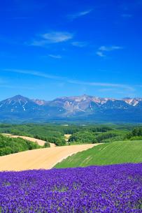 ラベンダー畑と十勝連峰の写真素材 [FYI01524359]