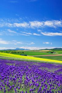 ラベンダーと菜の花畑と芦別岳の写真素材 [FYI01524365]