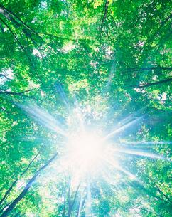 新緑のブナ林と木もれ日の写真素材 [FYI01524412]