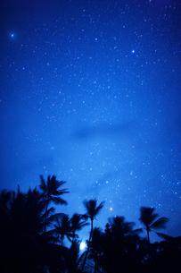 明けの明星とヤシの林の写真素材 [FYI01524418]
