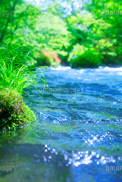 清流と新緑の写真素材 [FYI01524461]