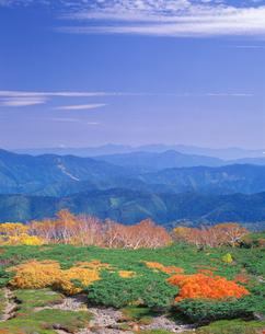 ナナカマドの紅葉 甲斐駒ケ岳方向の写真素材 [FYI01524561]