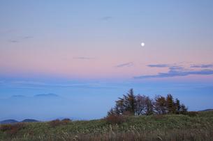 カラマツ木立と満月と浅間山 夕景の写真素材 [FYI01524658]