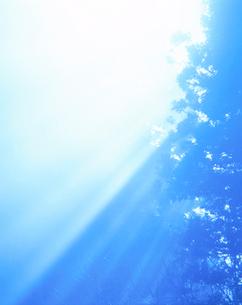 朝の木もれ日の写真素材 [FYI01524768]