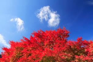 紅葉のモミジと雲の写真素材 [FYI01524813]