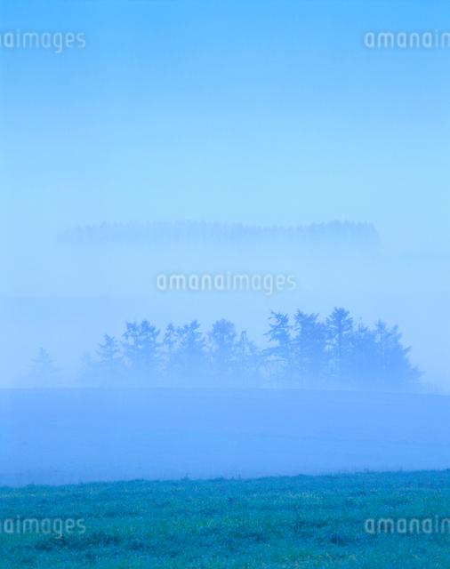 朝霧と木立と牧草地の写真素材 [FYI01524914]