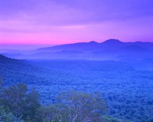 朝のブナなどの樹林帯と大平山の写真素材 [FYI01525015]