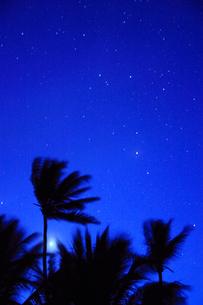 ヤシの木と明けの明星と黎明の星空の写真素材 [FYI01525079]