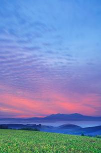 旭岳と朝焼けと大豆畑の写真素材 [FYI01525098]