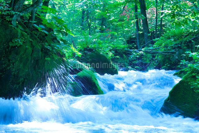 新緑と清流の写真素材 [FYI01525134]