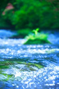 清流と輝く水面の写真素材 [FYI01525166]