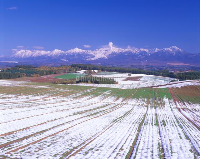 新雪の小麦畑と十勝連峰の写真素材 [FYI01525282]