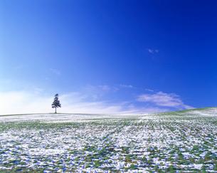 新雪の丘と木立の写真素材 [FYI01525321]