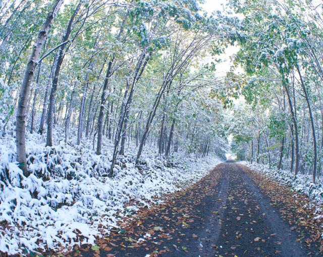 新雪の林道と樹林の写真素材 [FYI01525355]