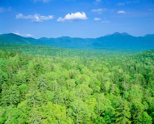 樹林と西クマネシリ岳の写真素材 [FYI01525435]