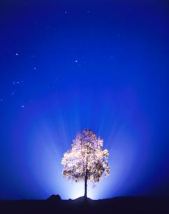 紅葉の白樺とオリオン座の輝く星空の写真素材 [FYI01525468]