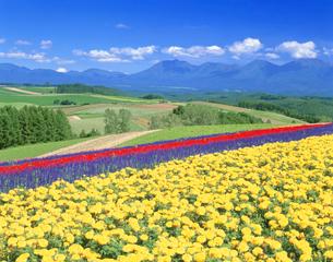 花畑の写真素材 [FYI01525655]