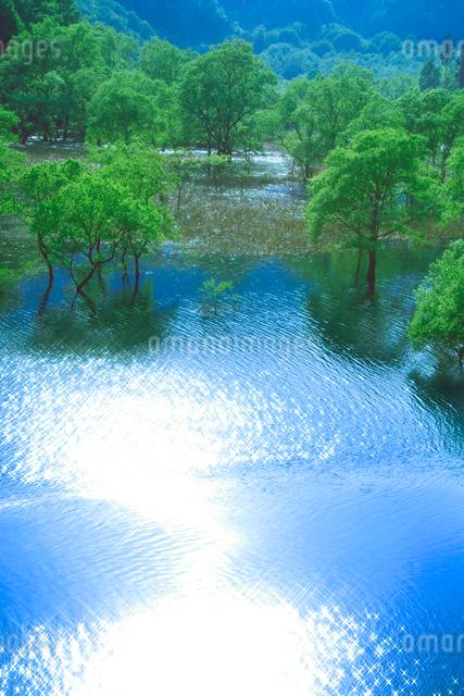 新緑の湖畔林と宝仙湖の写真素材 [FYI01525666]