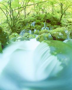 岩清水 苔の元滝の写真素材 [FYI01525787]