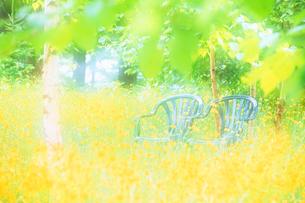 タンポポと椅子の写真素材 [FYI01525880]