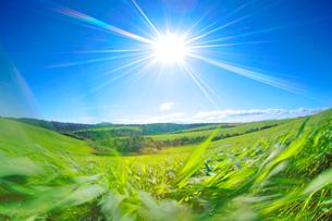 牧草と太陽の写真素材 [FYI01525897]