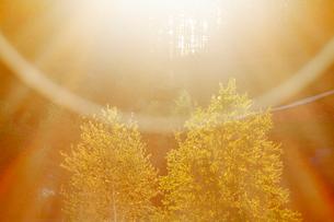 樹林と朝の光芒の写真素材 [FYI01525923]