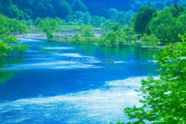 新緑の湖畔林と宝仙湖の写真素材 [FYI01526019]